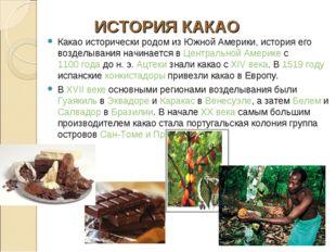 Какао исторически родом из Южной Америки, история его возделывания начинается
