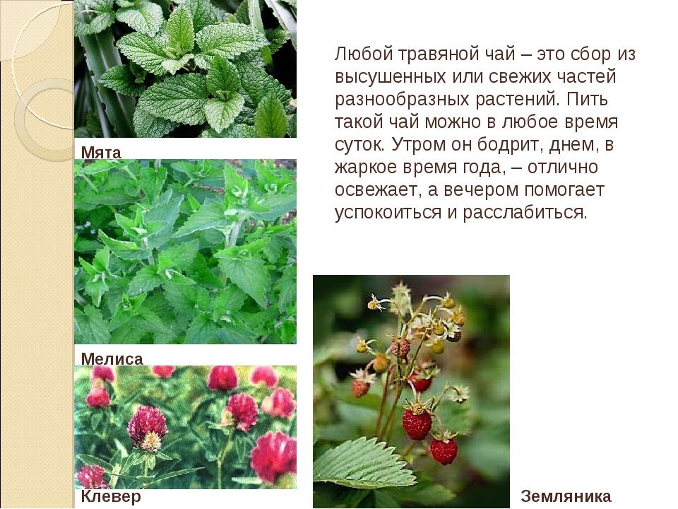 Любой травяной чай – это сбор из высушенных или свежих частей разнообразных р...