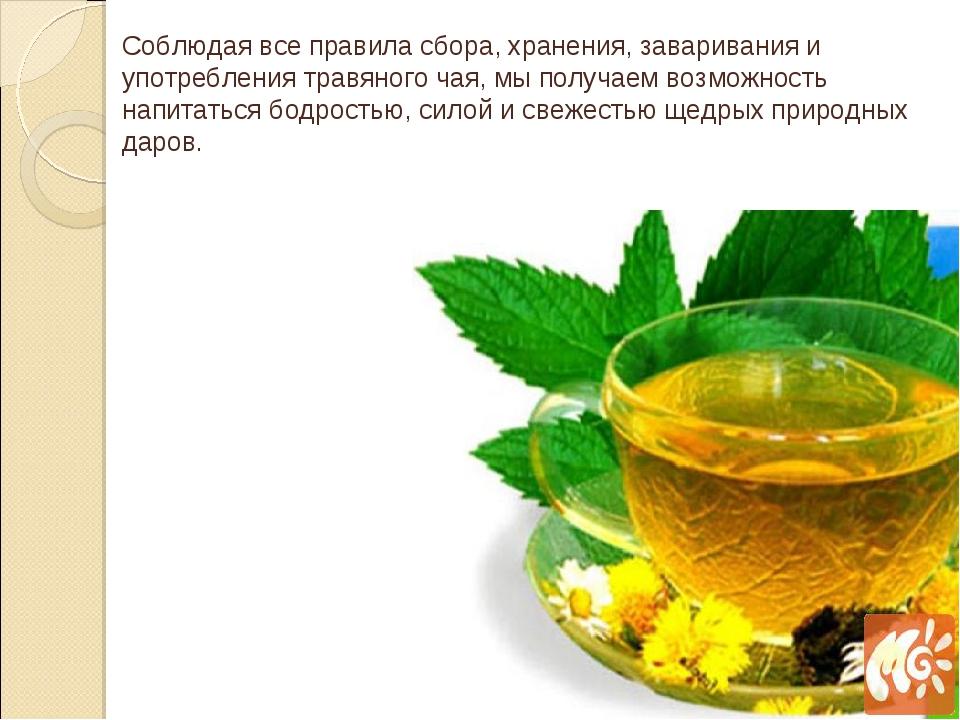 Соблюдая все правила сбора, хранения, заваривания и употребления травяного ча...