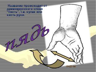 """19-23 см Название происходит от древнерусского слова """"пясть"""", т.е. кулак или"""