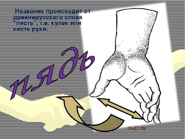 """19-23 см Название происходит от древнерусского слова """"пясть"""", т.е. кулак или..."""