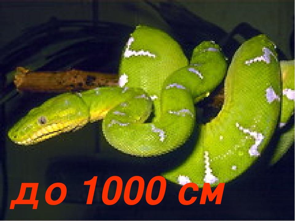 до 1000 см