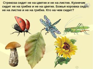 Стрекоза сидит не на цветке и не на листке. Кузнечик сидит не на грибке и не