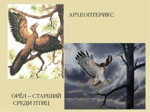 АРХЕОПТЕРИКС ОРЁЛ – СТАРШИЙ СРЕДИ ПТИЦ