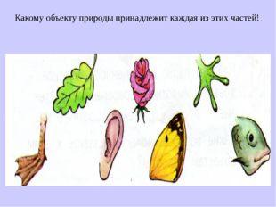 Какому объекту природы принадлежит каждая из этих частей!