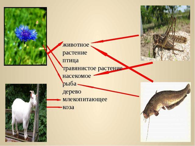 животное растение птица травянистое растение насекомое рыба дерево млекопита...
