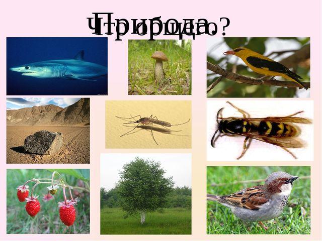 Что общего? Природа.