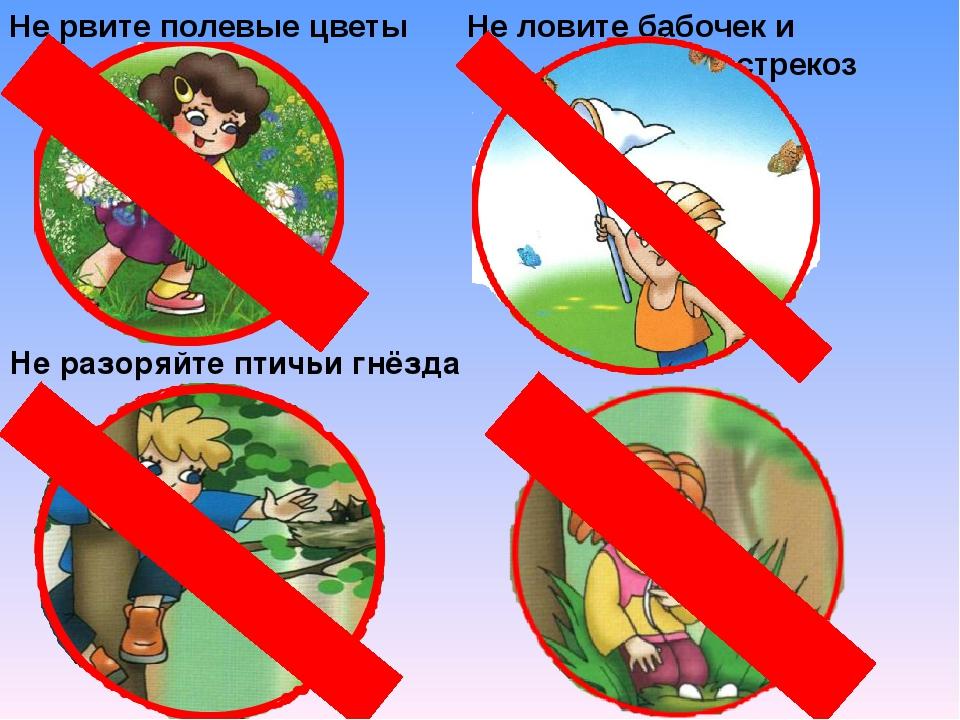 Не рвите полевые цветы Не разоряйте птичьи гнёзда Не ловите бабочек и стрекоз