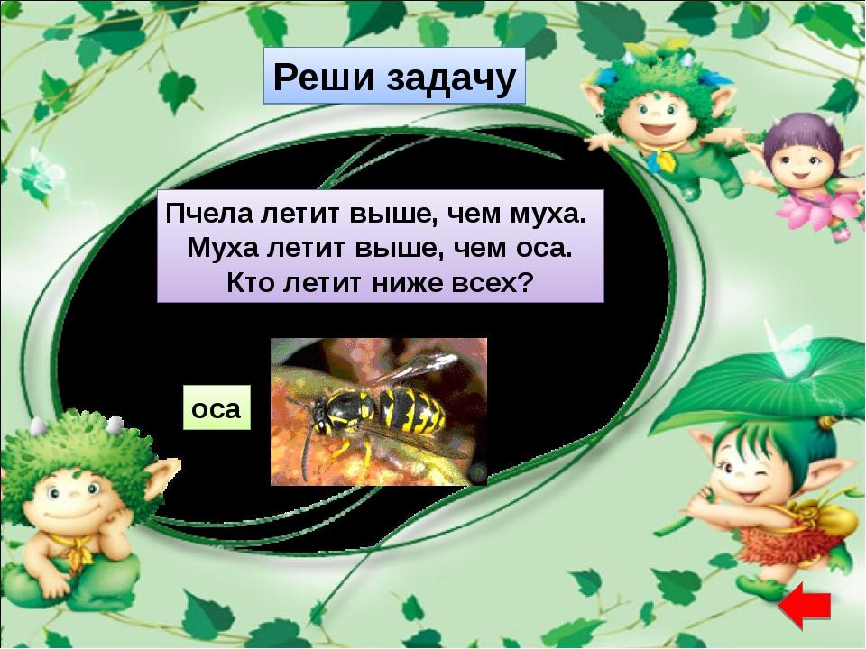 Реши задачу Пчела летит выше, чем муха. Муха летит выше, чем оса. Кто летит н...