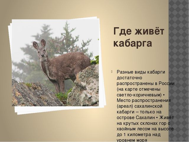 Где живёт кабарга Разные виды кабарги достаточно распространены в России (на...