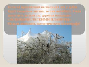 Если на протяжении нескольких лет у дубов будет съедаться листва, то они поги