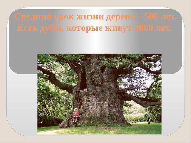 Средний срок жизни дерева – 500 лет. Есть дубы, которые живут 2000 лет.