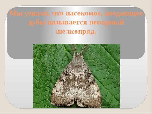 Мы узнали, что насекомое, поедающее дубы называется непарный шелкопряд.