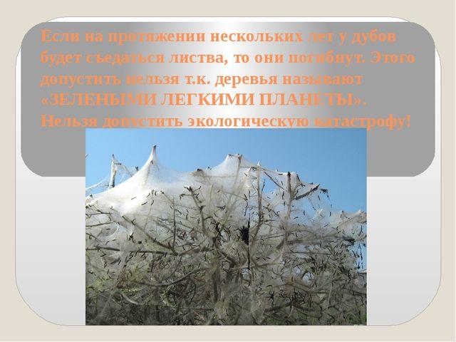 Если на протяжении нескольких лет у дубов будет съедаться листва, то они поги...