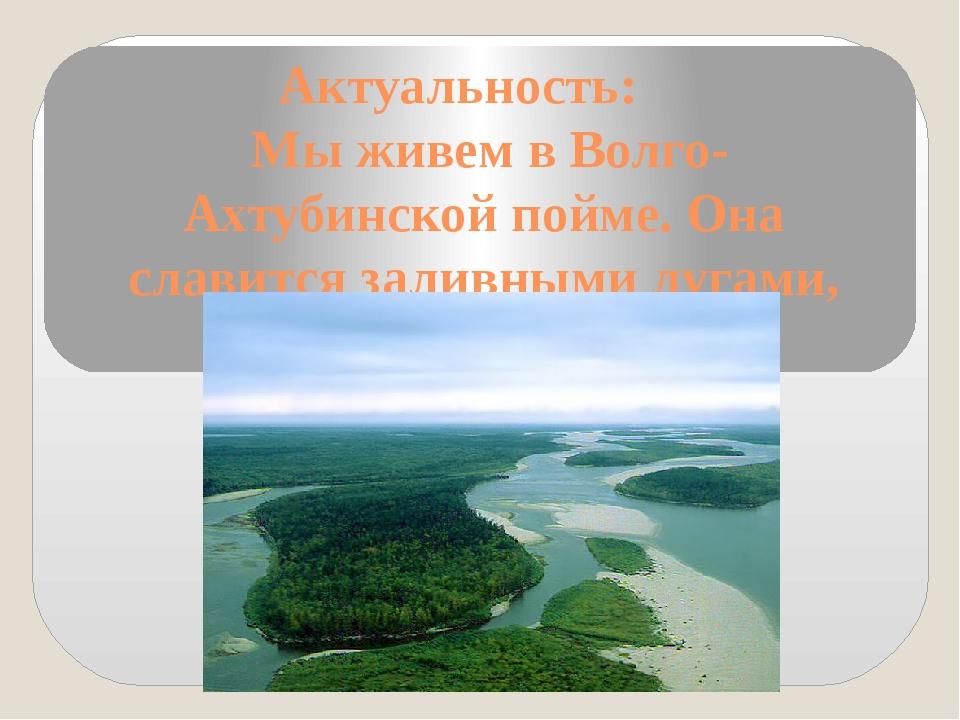 Актуальность: Мы живем в Волго-Ахтубинской пойме. Она славится заливными луга...