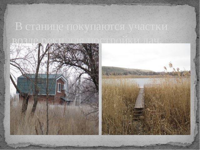 В станице покупаются участки возле реки для постройки дач.