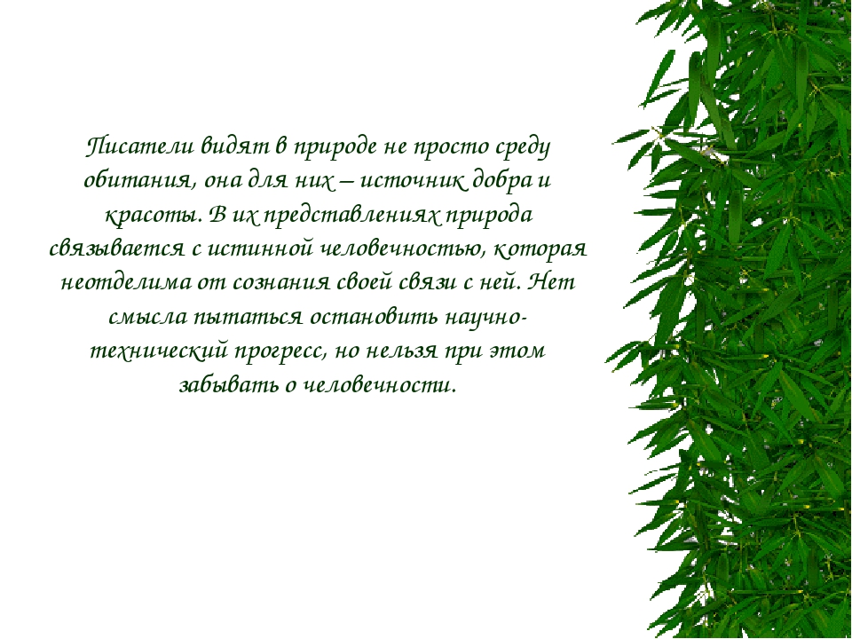 Писатели видят в природе не просто среду обитания, она для них – источник доб...