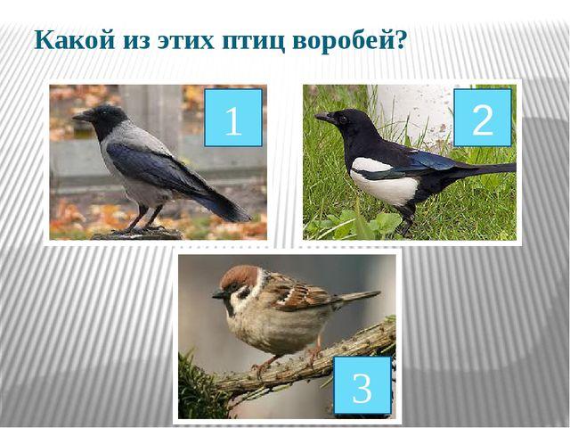 Какой из этих птиц воробей? 1 2 3