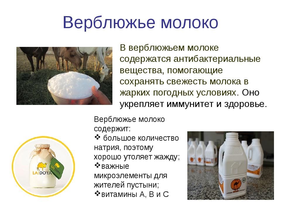 Верблюжье молоко В верблюжьем молоке содержатся антибактериальные вещества, п...