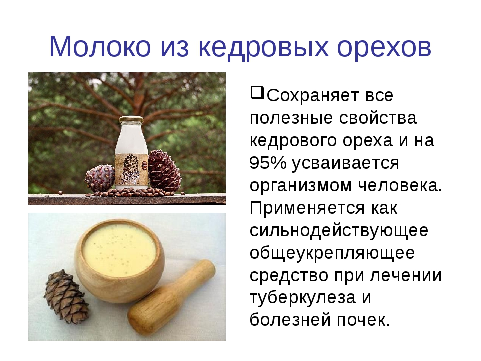 Молоко из кедровых орехов Сохраняет все полезные свойства кедрового ореха и н...