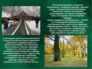 В заповедном урочище Киселева балка в Станично-Луганском района гармонично со