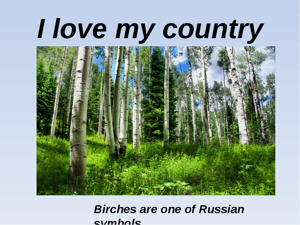 I love my country Birches are one of Russian symbols.