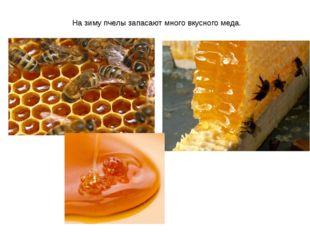 На зиму пчелы запасают много вкусного меда.