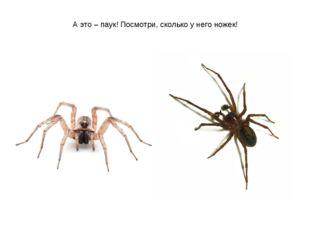 А это – паук! Посмотри, сколько у него ножек!