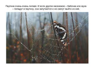 Паутина очень-очень липкая. И если другое насекомое – бабочка или муха – попа