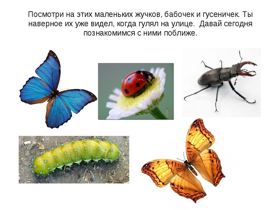Посмотри на этих маленьких жучков, бабочек и гусеничек. Ты наверное их уже ви...