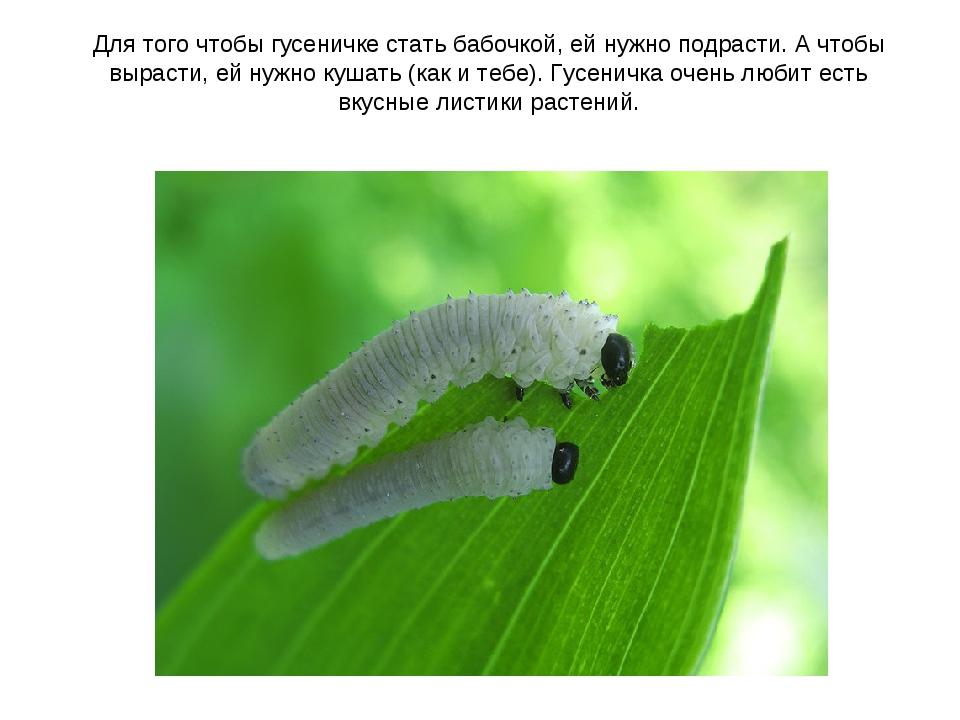 Для того чтобы гусеничке стать бабочкой, ей нужно подрасти. А чтобы вырасти,...