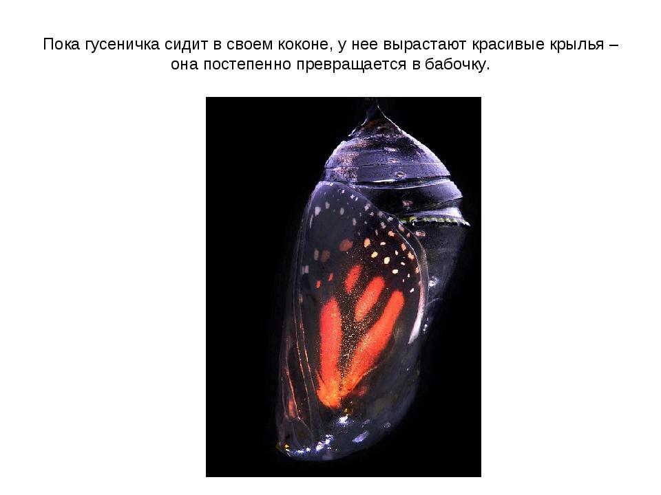 Пока гусеничка сидит в своем коконе, у нее вырастают красивые крылья – она по...