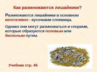 Как размножаются лишайники? Размножаются лишайники в основном вегетативно - к