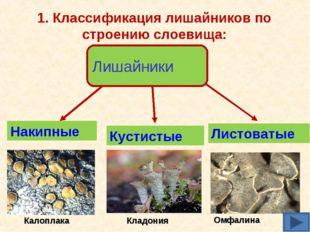 1. Классификация лишайников по строению слоевища: Лишайники Накипные Листоват