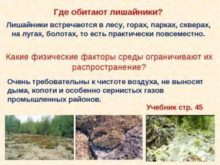 Лишайники встречаются в лесу, горах, парках, скверах, на лугах, болотах, то е