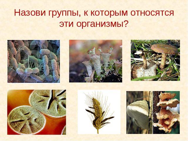 Назови группы, к которым относятся эти организмы?