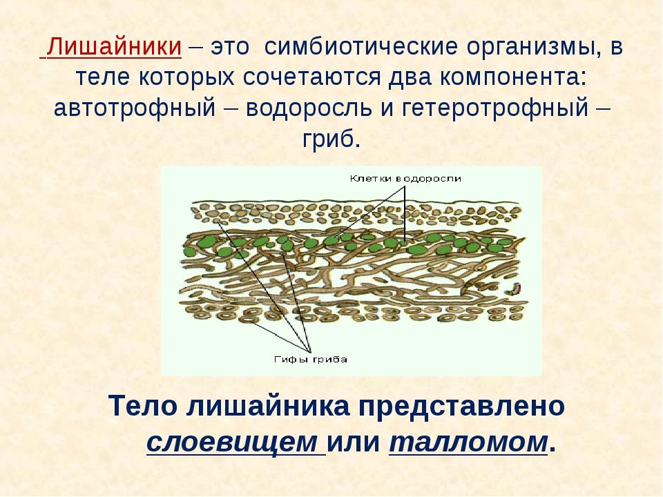 Лишайники – это симбиотические организмы, в теле которых сочетаются два комп...