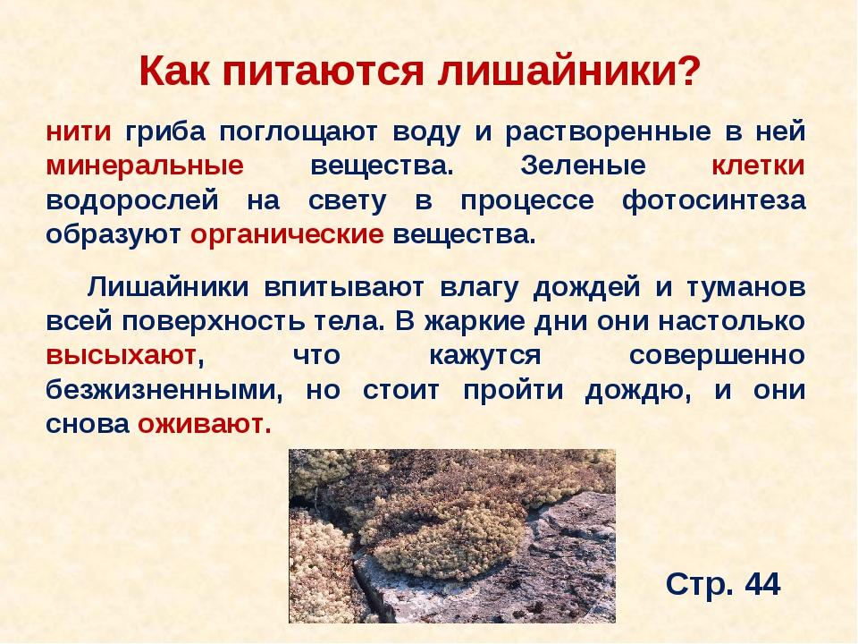 Как питаются лишайники? нити гриба поглощают воду и растворенные в ней минера...