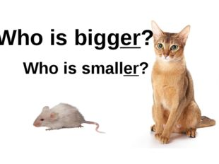 Who is bigger? Who is smaller?
