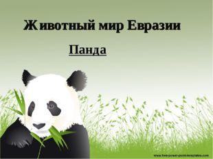 Животный мир Евразии Панда