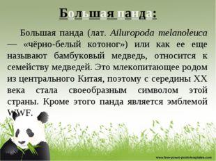 Большая панда: Большая панда (лат. Ailuropoda melanoleuca — «чёрно-белый кото