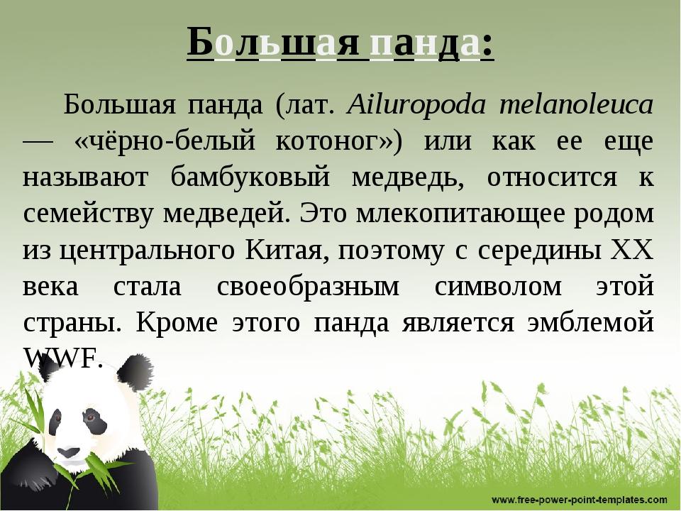 Большая панда: Большая панда (лат. Ailuropoda melanoleuca — «чёрно-белый кото...