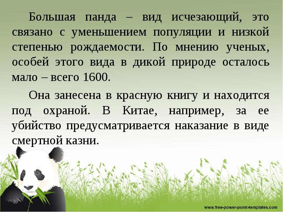 Большая панда – вид исчезающий, это связано с уменьшением популяции и низкой...