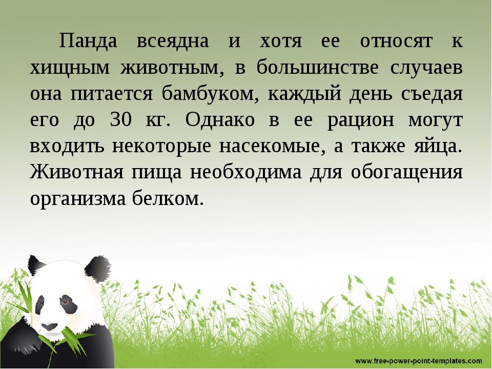 Панда всеядна и хотя ее относят к хищным животным, в большинстве случаев она...