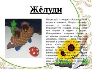 Жёлуди Плоды дуба – жёлуди – бывают разной формы и величины. Жёлуди созревают