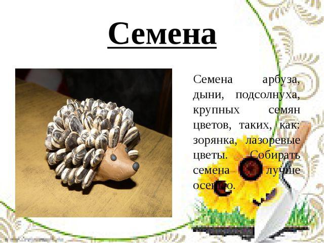 Семена Семена арбуза, дыни, подсолнуха, крупных семян цветов, таких, как: зор...