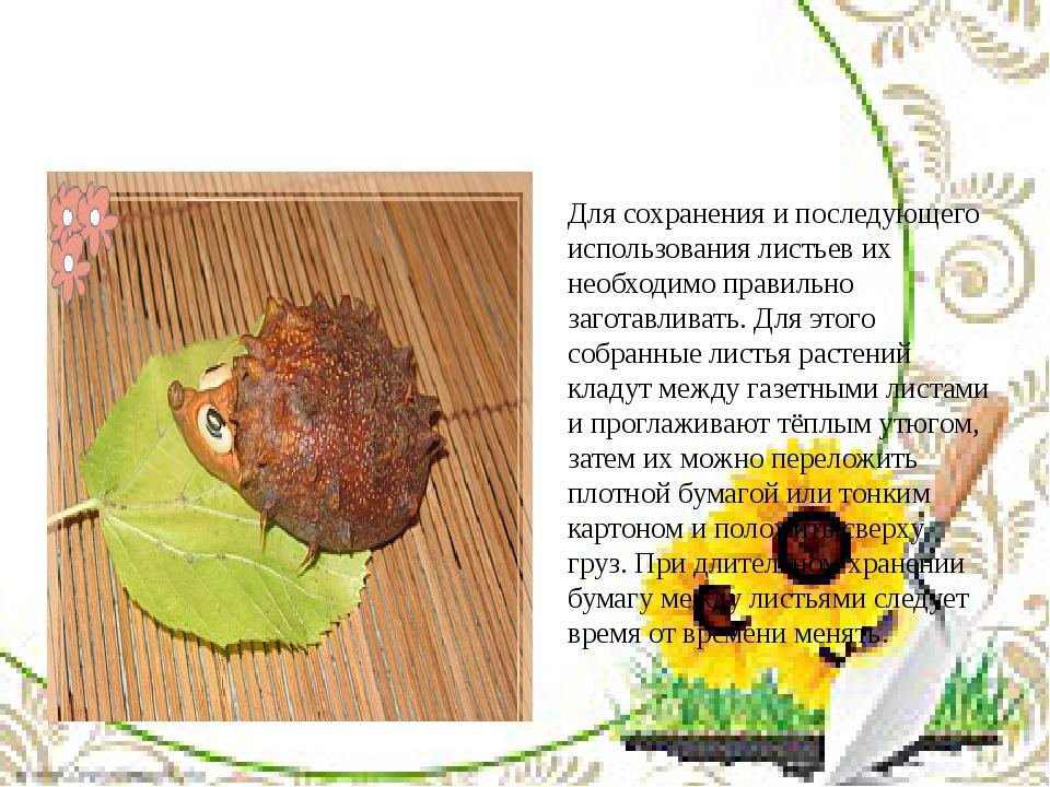 Для сохранения и последующего использования листьев их необходимо правильно з...
