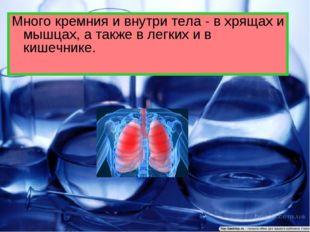 Много кремния и внутри тела - в хрящах и мышцах, а также в легких и в кишечни