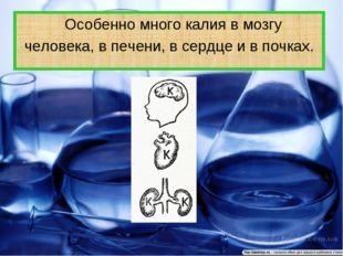 Особенно много калия в мозгу человека, в печени, в сердце и в почках.
