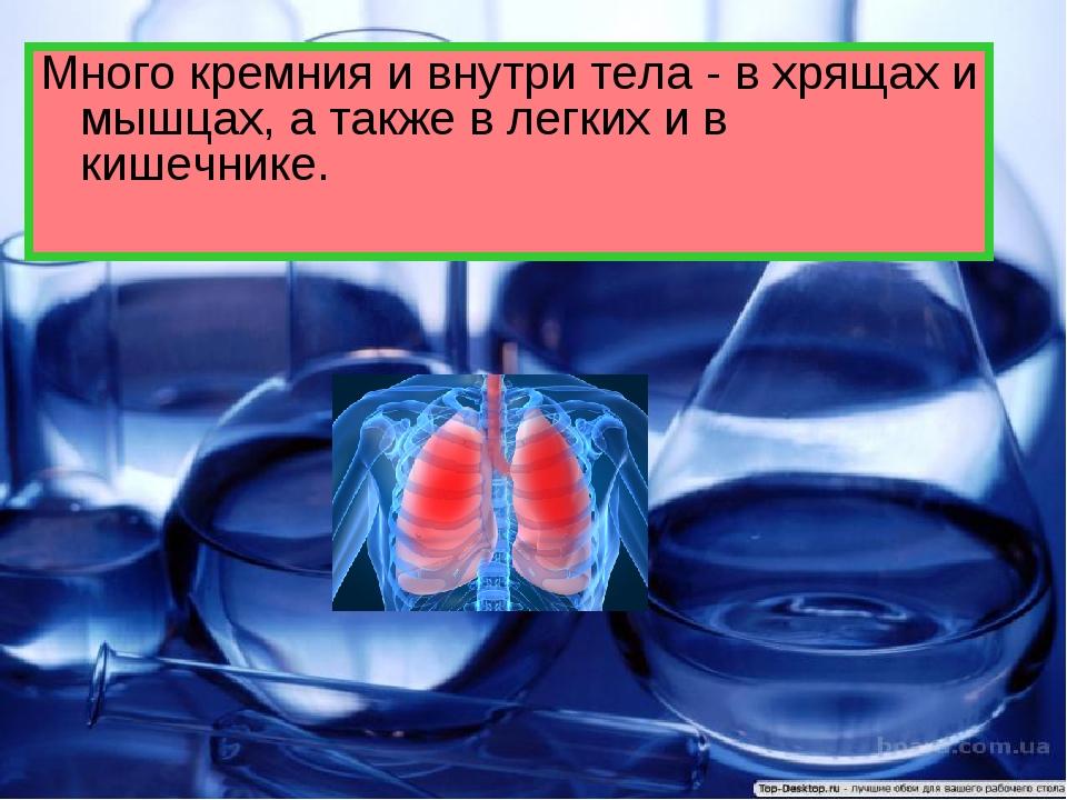 Много кремния и внутри тела - в хрящах и мышцах, а также в легких и в кишечни...